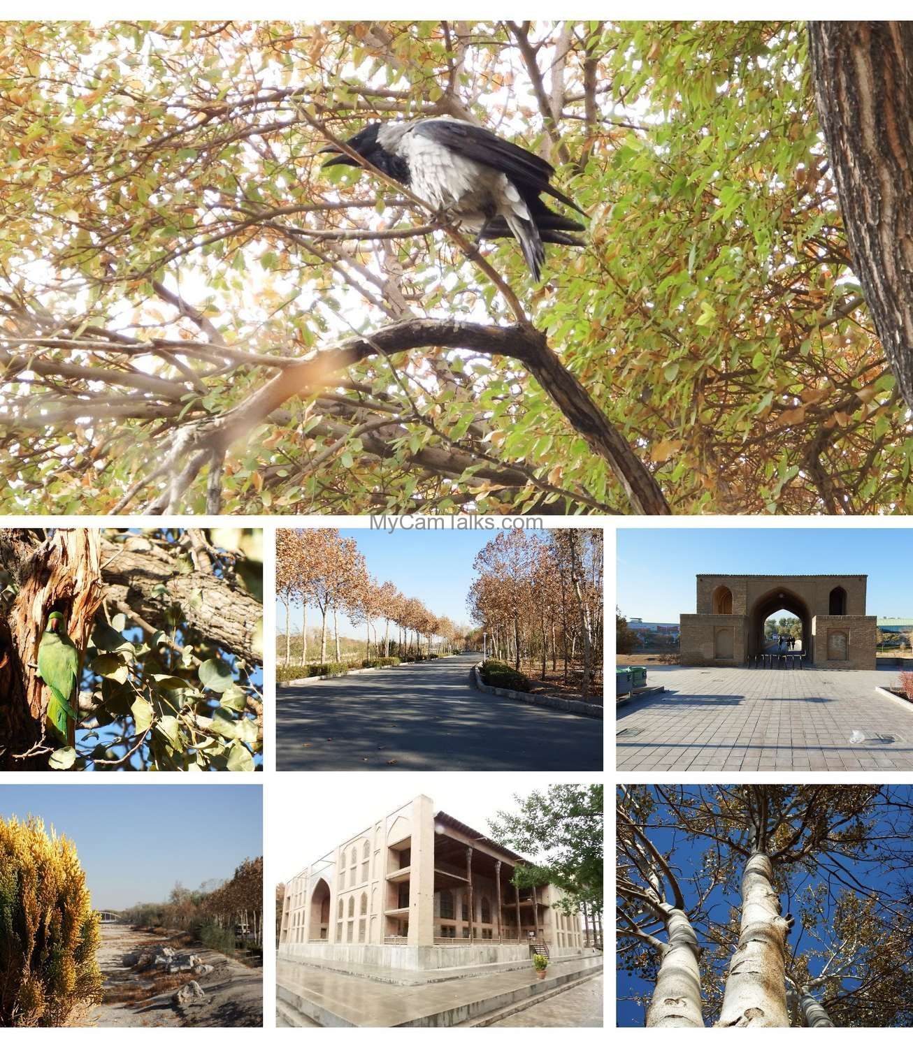 Bird watching in Esfahan